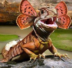 Wonder Lizard!