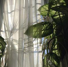 Tsukiuta The Animation, Monet, Plant Leaves, Green, Artwork, Home Decor, Aesthetics, Icons, Playlists