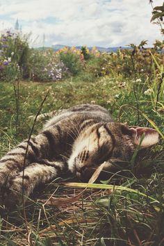 margaritabloom:  Awww, sweet kitty.  Sauvie by kennett mohrman   mstrkrftz:  Sauvie by kennett mohrman