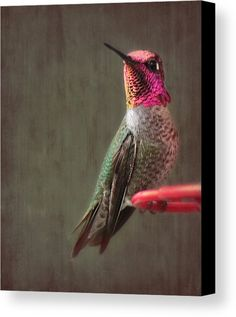 Hummingbird Flare Canvas Print by Melanie Lankford Photography.  All canvas prints are professionally printed, assembled, and shipped within 3 - 4 business days and delivered ready-to-hang on your wall. Choose from multiple print sizes, border colors, and canvas materials.