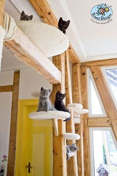 Kittens on a wooden cat walk with carpet platforms for a cat friendly home Cat Run, Cat Walk, Crazy Cat Lady, Crazy Cats, Animal Gato, Gatos Cats, Cat Shelves, Photo Chat, Cat Enclosure