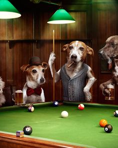 REAL Dogs Playing Pool by Photographer Julian Wolkenstein