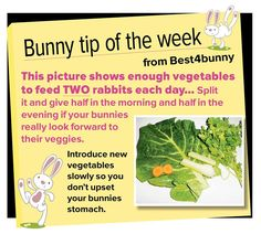 Bunny tip - week 11. This picture shows enough vegetables to feed TWO bunnies each day.