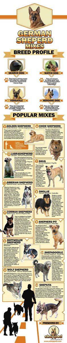 What Are The Most Popular German Shepherd Mixes. #GermanShepherd lovers