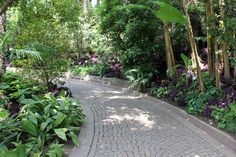 Der Palmenwald | Il Palmeto