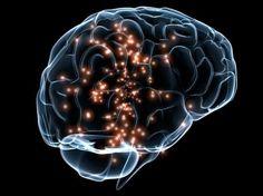 Key to the human brain unlocked