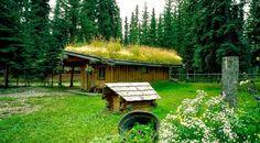 Dachbegrünung - Ökologisch, Energiesparend und Formschön