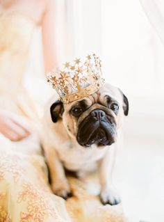 Wedding pet, cute pug with crown. Animals And Pets, Baby Animals, Funny Animals, Cute Animals, Cute Pugs, Cute Puppies, Dog Wedding, Luxury Wedding, Wedding Fun