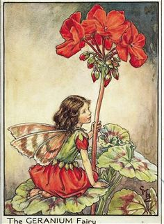 The geranium fairy - Fata del geranio; Cicely Mary Barker