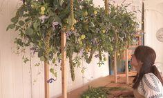RENG  flower&feast (@angnreng) on Instagram Flowers, Plants, Instagram, Royal Icing Flowers, Flower, Florals, Plant, Bloemen, Planting