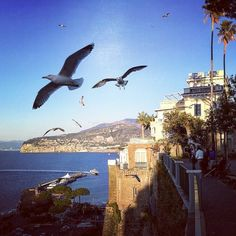 This is #sorrento in a #winter #day. The #shot was taken from the #publicgarden of the #city #coastofsorrento #coast #sea #landscape #tourist #tourism #twitter #visitsorrento #sea