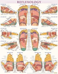 Our post includes loads of reflexology massage tips that will change your life. We have included lots of great charts for ears, hands, feet and body. Massage Tips, Hand Massage, Massage Benefits, Massage Therapy, Reflexology Points, Reflexology Massage, Foot Reflexology Chart, Lymph Massage, Acupressure Treatment