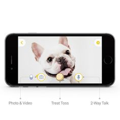 The furbo dog camera is so cute! Play with your pooch even when you're not home. Check out the full write up at Kim's Pets. <3