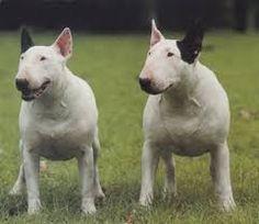 Resultado de imagen para imagenes de perros de raza