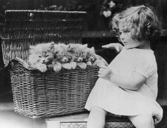 .~* (1930) vintage photo of cute' little girl and basket of kittens: those are BIG kittens!