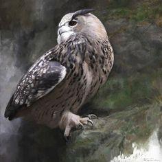 Birds Of Prey, Raptors, Owl, Creatures, Animals, Birds, Animales, Animaux, Owls