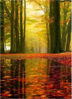 Reflections ~ The Netherlands