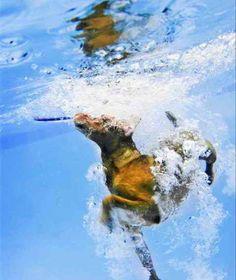 Underwater dogs, by Seth Casteel
