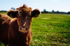 My latest blog post about ethical meat. What do I do when I buy meat?