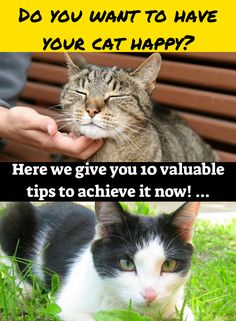 If you are determined to make your cat happier and healthier we present you 24 valuable tips that you can implement at once, you can select the best ones or apply the ones that you consider best or most appropriate according to your current situation.