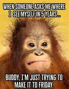 The Five-Year Future isnt meant to be intimidating. We are here to help you fin - Monkeys Funny - The Five-Year Future isnt meant to be intimidating. We are here to help you find out where youre going. Andwere just trying to make it to Friday too! Funny Monkey Memes, Funny Friday Memes, Its Friday Quotes, Funny Jokes, Memes Humor, Thursday Quotes, Weekend Quotes, Morning Quotes, Haha Funny
