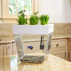 Back To The Roots Aquaponics Kit / Aquafarm: Bring the garden inside with a self-cleaning fish tank that grows food! The Water Garden (formerly the Aqua Farm) creates a closed-loop ecosystem—the fish feed Backyard Aquaponics, Aquaponics System, Hydroponics, 3 Gallon Fish Tank, Fish Tanks, Self Cleaning Fish Tank, Aqua Farm, Fish Feed, Gadgets