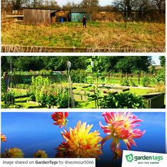 A massive congratulations to Chris & Denise for this truly amazing What a great today :) Amazing Transformations, Golf Courses, Congratulations, Garden, Instagram Posts, Garten, Lawn And Garden, Gardens, Gardening