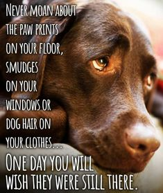 I Love Dogs, Puppy Love, Animals And Pets, Cute Animals, Miss My Dog, Pet Loss Grief, Dog Quotes Love, Old Dogs, Animal Quotes