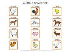 Animale domestice by Dana Horodetchi, via Slideshare Romanian Language, Little Boys, Activities, Education, Comics, Flora, Baby, Speech And Language, Vocabulary
