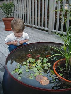 Kids love the fish! www.ContainerWaterGardens.net