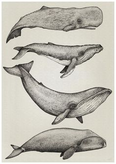 Whale Print, By Nathan Miller Printed on Torentto Paper Whales done with dots. drawn with & Black STAEDTLER Pigment liner Pens Animal Drawings, Art Drawings, Whale Illustration, Astronaut Illustration, House Illustration, Portrait Illustration, Watercolor Illustration, Digital Illustration, Whale Tattoos