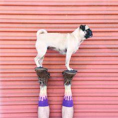 Instagram photo by @Doug Smith (Doug Smith) | Clarks Desert Boots | pugs