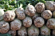 Bálint György kertről, növényekről | Kinek ajánlható a gumós zeller?