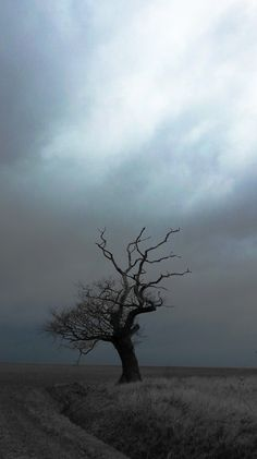 Stormy Skies + lone tree + great expanse + something buried at its roots