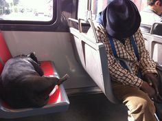 MUNI never disappoints. San Francisco, Sleeping Dogs, Beautiful Images, Let It Be, Pets, Brown, Brown Colors, Animals And Pets, Dog Sleeping