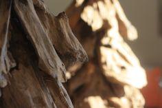 Les sapins de bois (Superbes racines de teck)