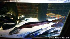 SEA LIFE Berlin - Aquarium Spandauer Str.3 10178 Berlin #Berlin #Ausflugsziele #Sealife #Sea #Life #Aquadom #Aqua #Dom