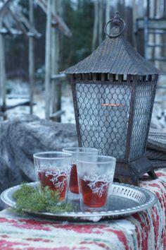 Poro / Reindeer, Kuva: Ilona Pietiläinen #Muurla