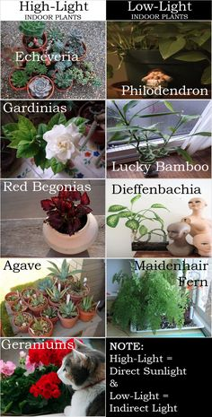 HOUSEPLANTS :: Indoor Plants for Apartments (& Homes!) :: High-light & low-light selections | #dailycandy #houseplants #indoorgarden