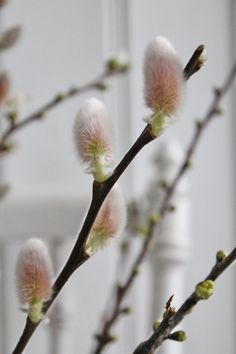 ~ Spring has Sprung ~