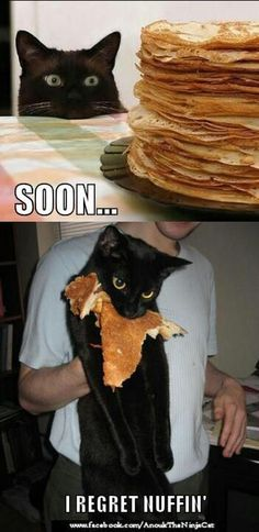 Worth It - LOLcats is the best place to find and submit funny cat memes and other silly cat materials to share with the world. We find the funny cats that make you LOL so that you don't have to. Funny Animal Memes, Cute Funny Animals, Funny Animal Pictures, Cat Memes, Funny Cute, Cute Cats, Funny Memes, Squirrel Memes, Super Funny