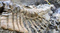 Descubren una cola de dinosaurio en el norte de México
