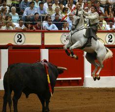 a matador on a horse is called a rejoeador.