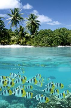 Swim with the fishes in the Seychelles - top of the bucket list! #HiltonStory