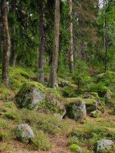 🇫🇮 Mossy rocks in the forest (Finland) by Eila Kaarina 🌲 Forest Path, Tree Forest, Forest Mountain, Meanwhile In Finland, Fantasy Forest, Walk In The Woods, Green Landscape, Woodland Creatures, Picture On Wood