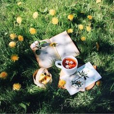 Image discovered by Mari Kawai. Find images and videos about photography, nature and aesthetic on We Heart It - the app to get lost in what you love. Spring Aesthetic, Nature Aesthetic, Aesthetic Plants, Aesthetic Green, Aesthetic Indie, Diy Nature, Nature Tree, Flowers Nature, Spring Flowers