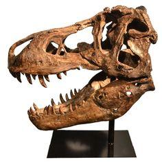 Found it at Wayfair - Dinosaur Skull Figurine