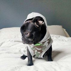 French Bulldog Puppy, Style is the message ™ @deux_chainz