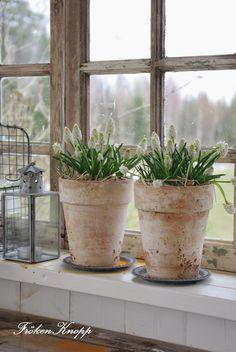 Fröken Knopp : Weathered Pots with Spring Blooms