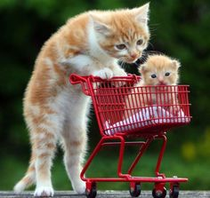 Mama taking baby for a ride.  Memes Cats Sitting Like Humans | fotos-engracadas-de-animais-08.jpeg
